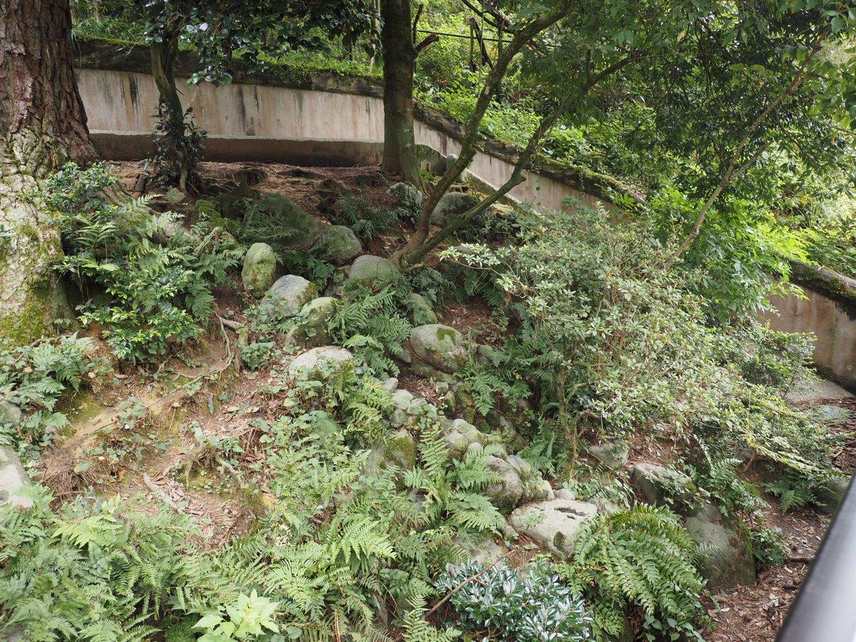 広めのタヌキ舎! タヌキはどこにいるのかなぁ〜 あっ! タヌ団子発見!!! #石川県森林公園 #ホンドタヌキ #タヌキ https://t.co/30ekGwL7GF