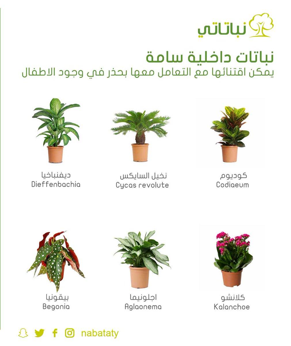 محلي في الاعلى عي ن نباتات الزينة الداخلية واسمائها Dsvdedommel Com