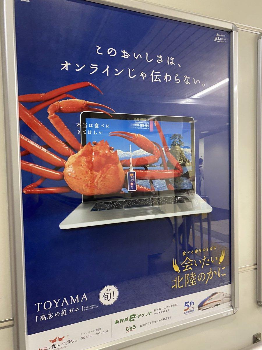 日本北陸新幹線似乎在瘋狂地發廣告宣傳螃蟹? EjX0OqcU4AAYqs2