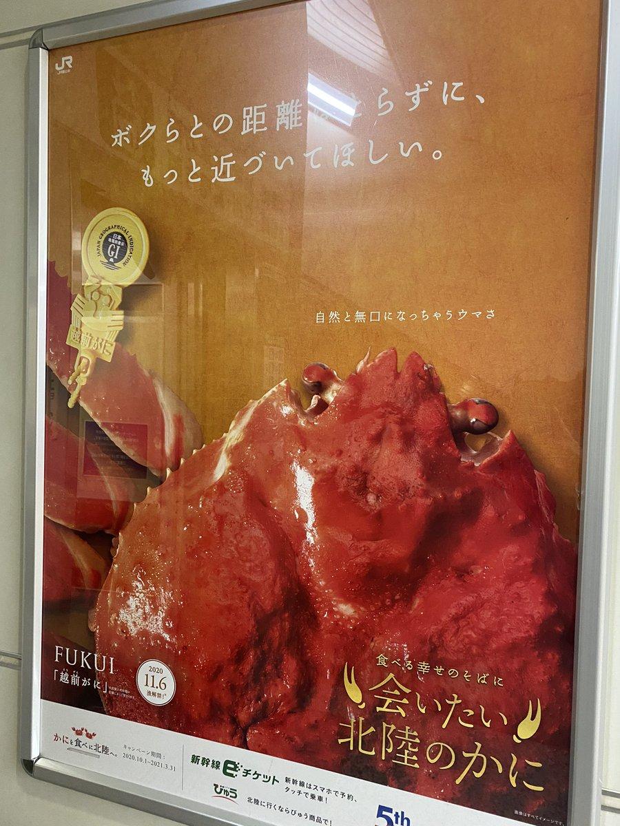 日本北陸新幹線似乎在瘋狂地發廣告宣傳螃蟹? EjX0OqfVoAAa_RW