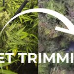 Image for the Tweet beginning: Benefits of Automated Trimming One of
