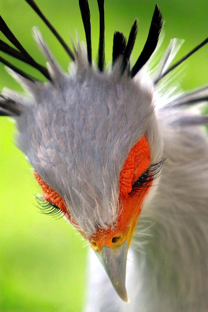 なんやこの美顔。鳥やのに惚れてしまいそう。