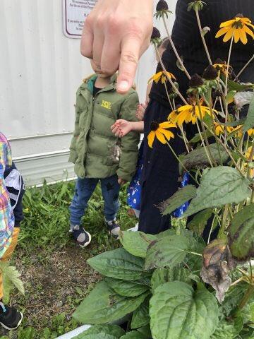 Garden surprises = social and emotional well-being and pleasurable inquiry @CR4YC #pixies #dinosaureggs @AllansonDarlene #brentwoodpark https://t.co/Ka6NkznF1F… https://t.co/l7xje76P5M