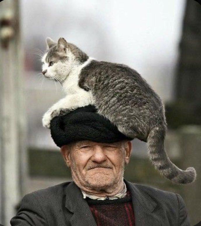 「おじいさん 猫」で画像検索して手軽に幸福になるとするか