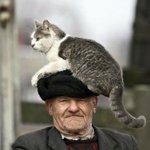 手軽に幸福になるには?「おじいさん 猫」で画像検索してみて!