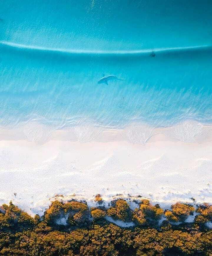 Jervis Bay, Australia - - Follow @nature_seas for amazing content. - - Mother Nature 🌱 - Credits: 📷 @tomnoske _ _ _ _ _ _ _ _ _ _ _ _ _ _ _ _ _ _ _ _ _ _ _ _ _ _  #nature🌱travel #sharkie #beachvacation #natureview #beach🌊 #sharksquad #fishofinstagram… https://t.co/sMGJB3Z4qZ https://t.co/XXx6K5ByHV