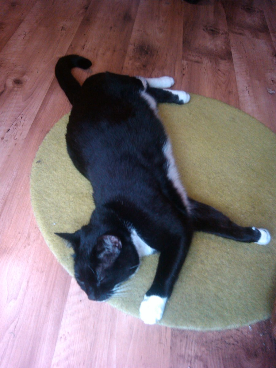 HI MOGYOGGIES! NEXT #MOGYOG POSE ON MON 2 NOV at 8pm UK TIME IS #STRETCH!😺💖🧘♀️  As u can see from my demo pics, dis pose can be done on ur front, back or on ur side!😸  It's great fur keeping ur muscles healthy an flexibles, an improving ur posture!🧘♂️💕  U has just 3 weeks!😹🧘 https://t.co/Goa6WheLwG