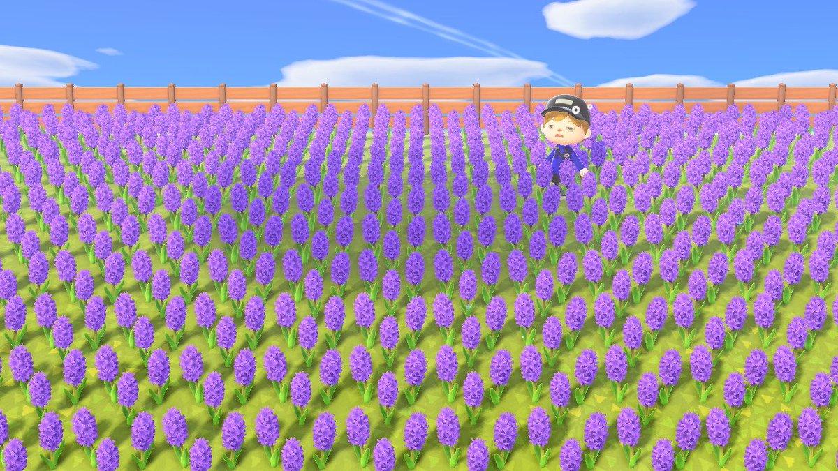 森 ヒヤシンス あつ 紫 の