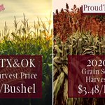 Image for the Tweet beginning: 🌽🌾 2020 Texas & Oklahoma Corn
