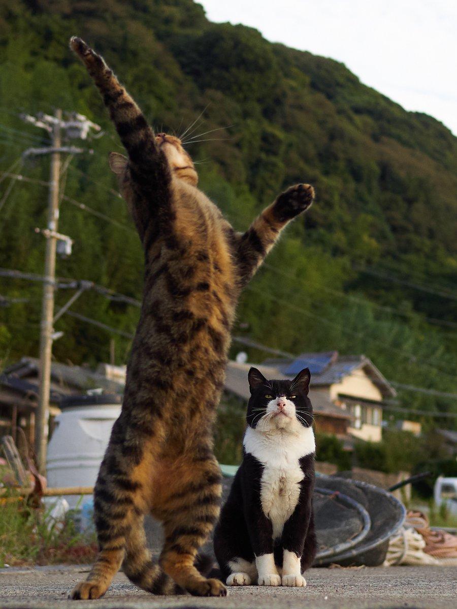 後ろの「弟子の稽古を見守る親方」感のある猫のせいで手前の猫達のポーズが全然入ってこない