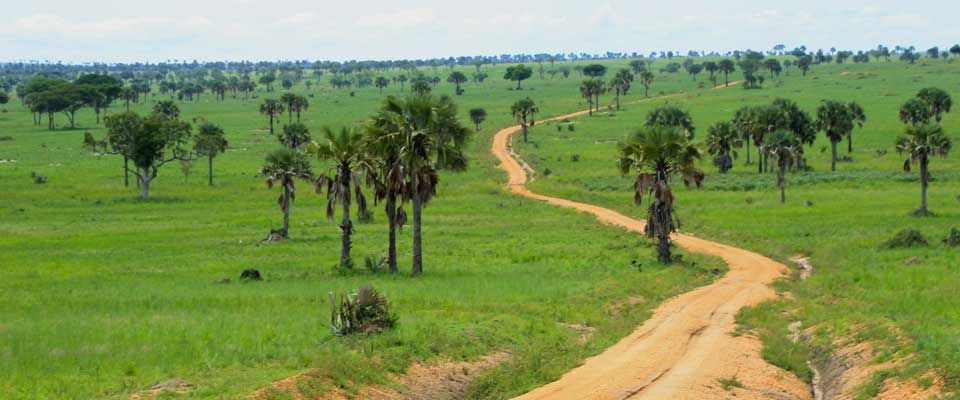 A Game Drive to any of Uganda's Game Parks and Reserves will lead you through such planned Tracks as you sight wildlife on either sides.  #SafariUganda #TourUganda #SunTrackAdventures #gameparks https://t.co/4zmipBWXiX