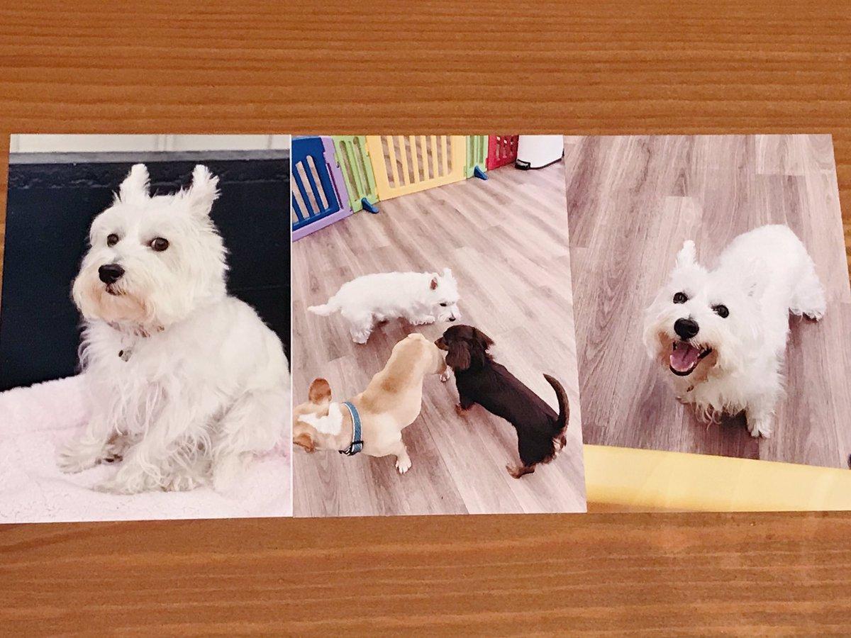 数時間犬を預かってもらえるお店を利用したところ、もらった写真が「深い絶望→仲間との出会い→ウェーイ!」の3本立てですごくわかりやすかった