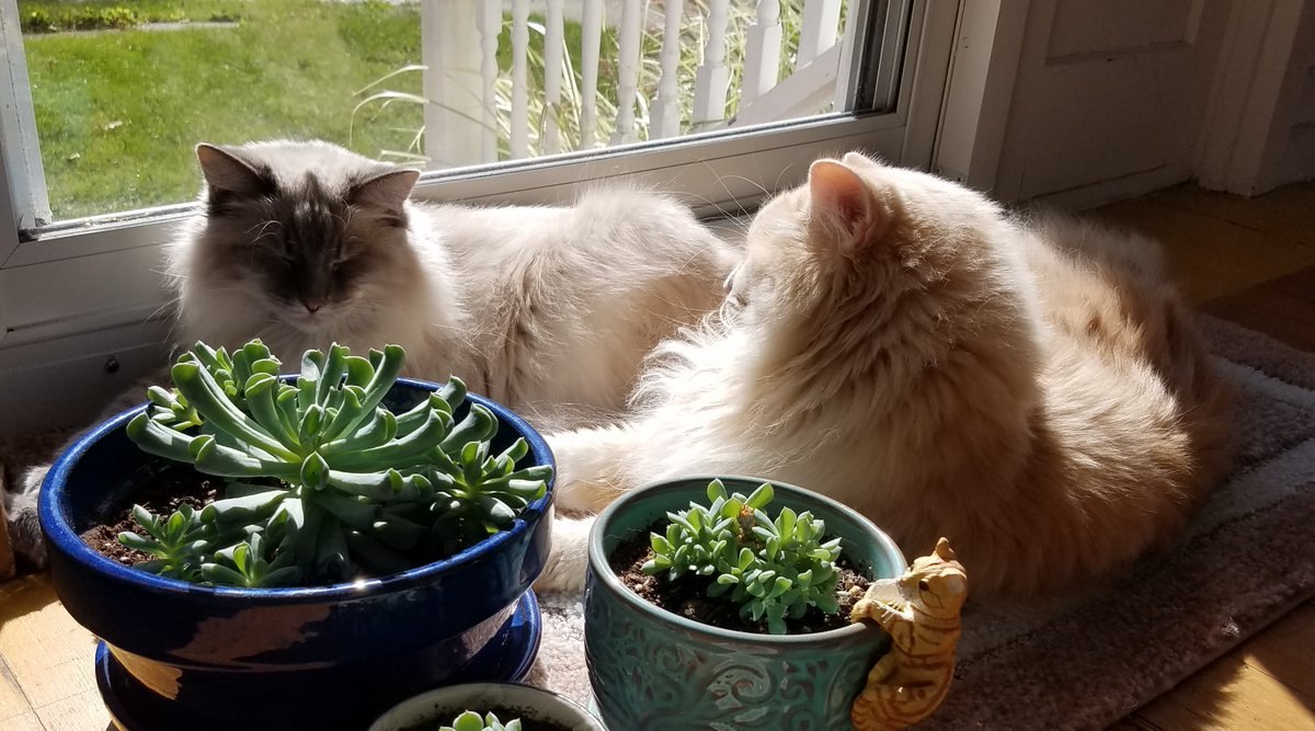 Watching the cats sun themselves on the porch brought her a moment of #satori. She closed her computer, turned off her phone and joined them in the simple act of basking in the afternoon sun. #vss365 https://t.co/CDbmiCJFfn