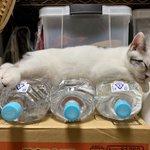 これを見れば納得?!猫除けペットボトルが廃れてしまった理由!