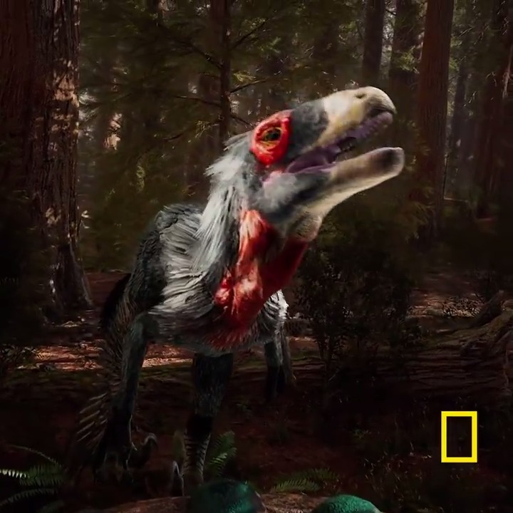 This entire week, we are celebrating what scientists have unearthed about the secrets of dinosaurs in recent years:  #NatGeoReimaginingDinos