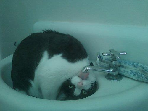 就不能正常地喝水嗎www Ejm2MCvUwAA-65Z