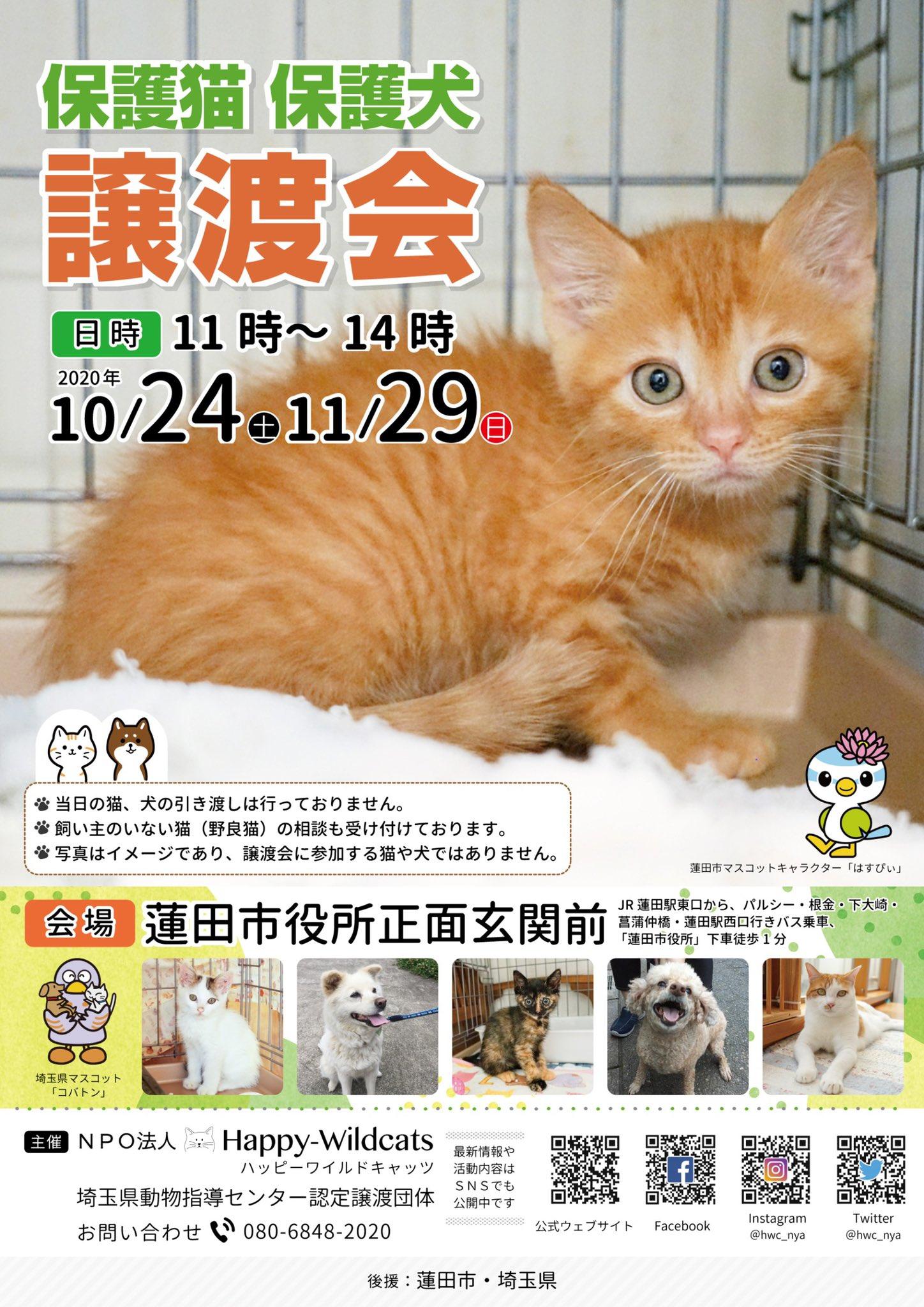 埼玉 保護 猫