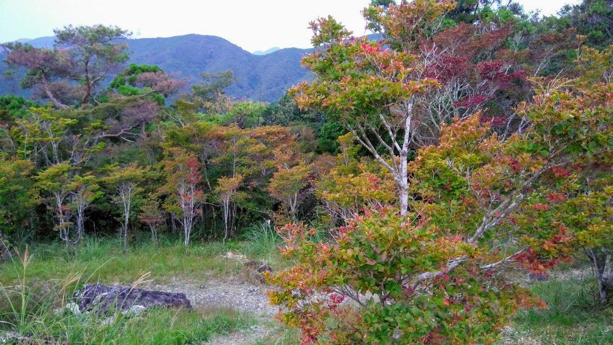 千葉山の #ハイキングコース 内に群生する ドウダンツツジが少~しづつですが 色付き始めました🍁 #ドウダンツツジ の葉は 秋になると真っ赤に染まり 葉が密集した枝姿はとても艶やかで、 春に見る可憐さとは違う姿を見せてくれます☺ 例年の見頃は11月ですが令和2年は少し早まるかも⁉ #島田市 #千葉山 https://t.co/ho6wqniAvV