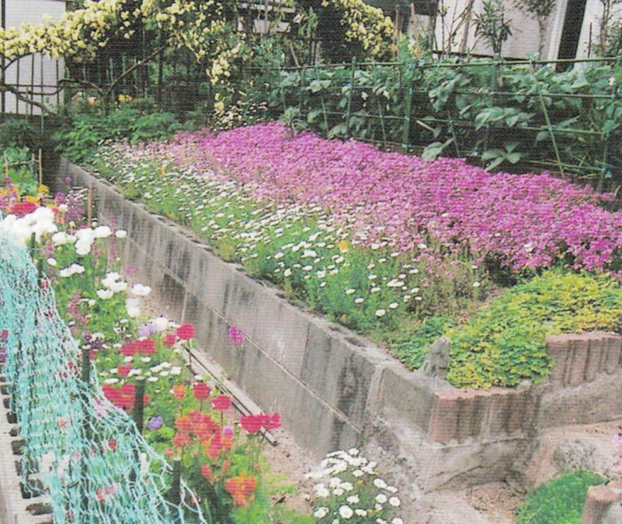#HB廣報 平成25年5月号   HB-101で #芝桜 と #ノースポール と #モッコウバラ が綺麗です。  #植物活力液 #HB101 #顆粒HB101 #白HB101 #野菜 #花 #果実 #農業 #家庭菜園 #ガーデニング #観葉植物 #植物の栄養 #植物のチカラ #土壌改良  https://t.co/Uam6PPbNWJ https://t.co/2Qyuk2pcT9