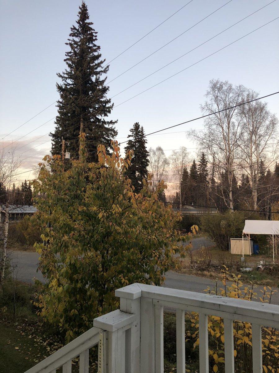 すっかり氷点下になったフェアバンクスの夕方。空気がピリっと締まっています。そろそろ雪❄️の予報も。暖かい秋日和が続いてましたが冬が近いですね。#アラスカ #フェアバンクス #氷点下 #晩秋 #冬 #alaska #fairbanks #belowfreezing #latefall #winter https://t.co/rIQf17Hlbq