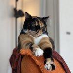 猫は10歳過ぎると人間語を理解するらしいが…。7歳からモノを使って要求を表す猫もいる?