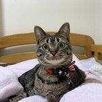 生理現象じゃん…。くしゃみをすると謝るまでずっと見てくる猫w
