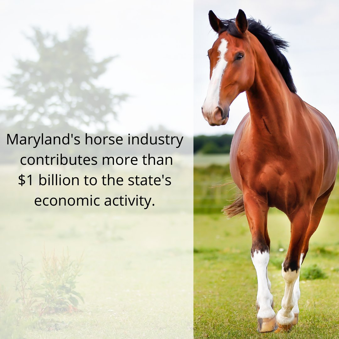Did you know? Maryland's horse industry contributes more than $1 billion to the state's economy $500 million+ in employee income. #MyMdFarmers #MarylandHorseMonth #MarylandEquestrian #Horse #Equestrian https://t.co/4NRkgnb0GD