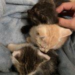 生まれて間もない子猫が捨てられていた!責任を持って育てましょう。