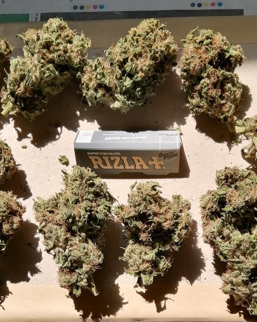 """👀 Since i dont have to go to work tomorrow, im just going to catch up on some """"Garden Work"""" and a wee bit product research #420fromhome #Mmemberville 👌💚💨💨💨💨💨💨💨 https://t.co/YLXNxYdFYL"""