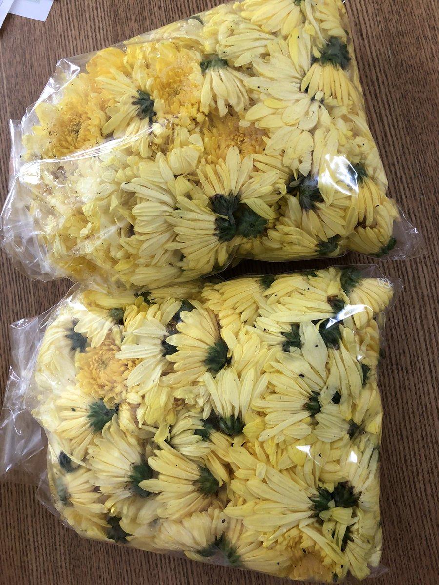 菊 の 花 食用