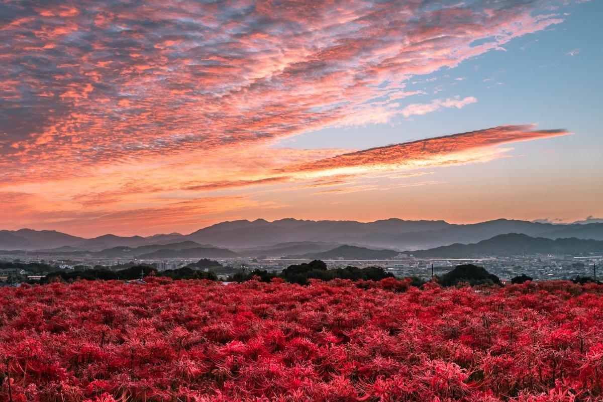 奈良県でとんでもなく美しい彼岸花の絨毯が撮れたので見てほしい。