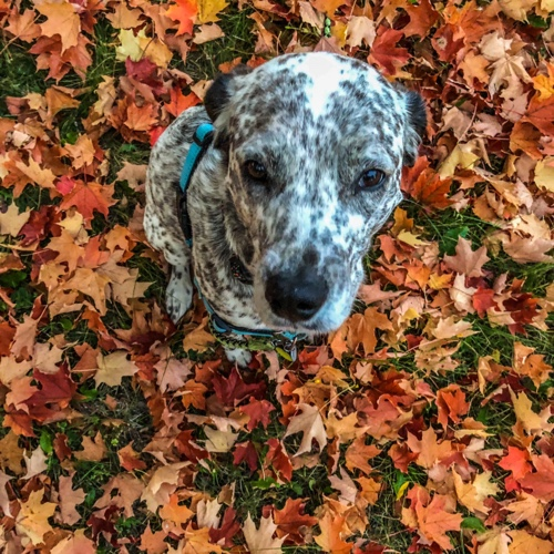 Replying to @SeagerBeans: #Wednesdaymorning 🍁me alone. 🐶don't wanna 🚫🐾👉🏽0.2 @CharityMiles for @PLAN4ZERO. #PLAN4ZERO #0X2030