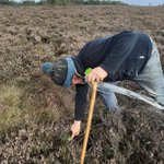 Image for the Tweet beginning: Sphagnum moss planting on Harden