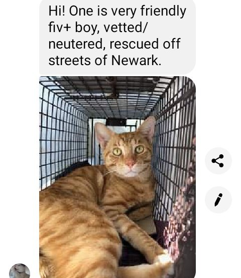 Can anyone in or near NJ help this guy? He's too sweet to go back to the streets right b4 winter 😿 https://t.co/0KZiwj94Wm
