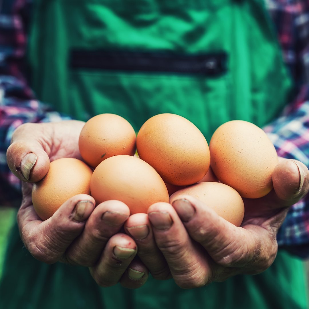 America's egg farmers across the nation are donating more than 46 million eggs in 2020, the largest amount ever recorded, as food banks experience unparalleled demand due to COVID-19. https://t.co/1zvvzAKJ1W #MyMdFarmers #Eggs https://t.co/evvigAOEBb