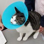 愛猫からのSOSサイン見逃さないで!これらの症状が見られたら危険な場合が多い!