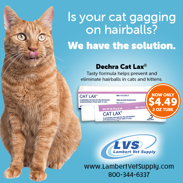 Gagging On Hairballs? We Have the Fix!  Cat Lax Hairball Remedy by Dechra helps stop cat gagging, hacking & retching due to hairballs & eliminates their formation! It's safe to use daily & most cats like its palatable taste! Learn more --> https://t.co/3Og5iUDNKk https://t.co/VV90ub5c7X