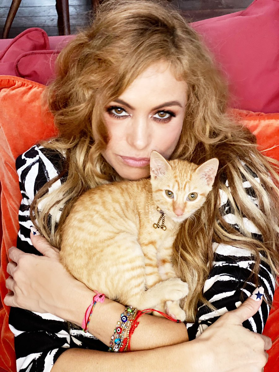 Les presento a la #GingerGoldenRubio es el primer felino miembro de la familia, me estaba perdiendo de algo increíble🐱💛. I want to introduce #GingerGoldenRubio the newest member and first feline of the family. #miau