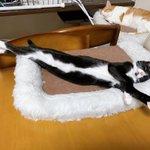 実写版トム&ジェリー?? くつろぎすぎて驚き長さとなる猫さん!