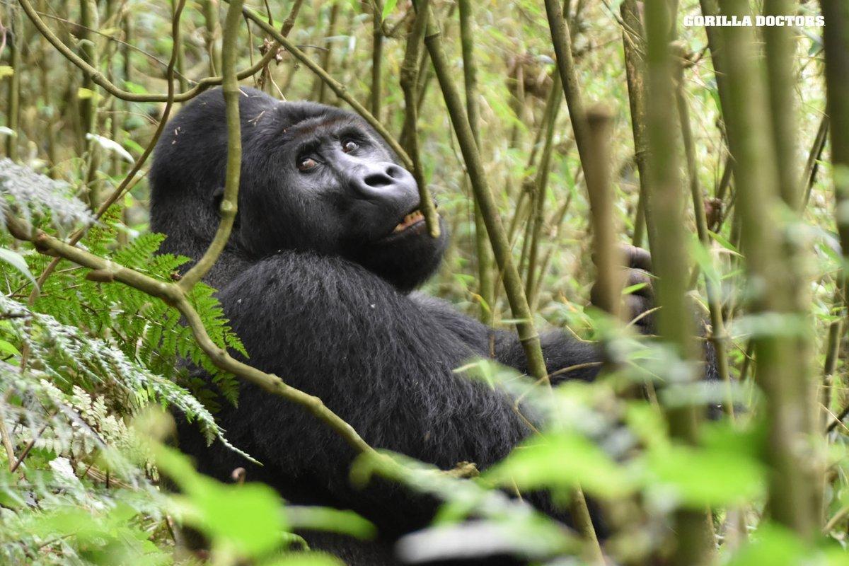 "A M A R A N T H I N E on Instagram: ""Are you watching OUR PLANET on  Netflix?? ⠀⠀⠀⠀⠀⠀⠀⠀⠀⠀⠀ I watched the Jungles episode l…   Primates,  Orangutan, Endangered animals"