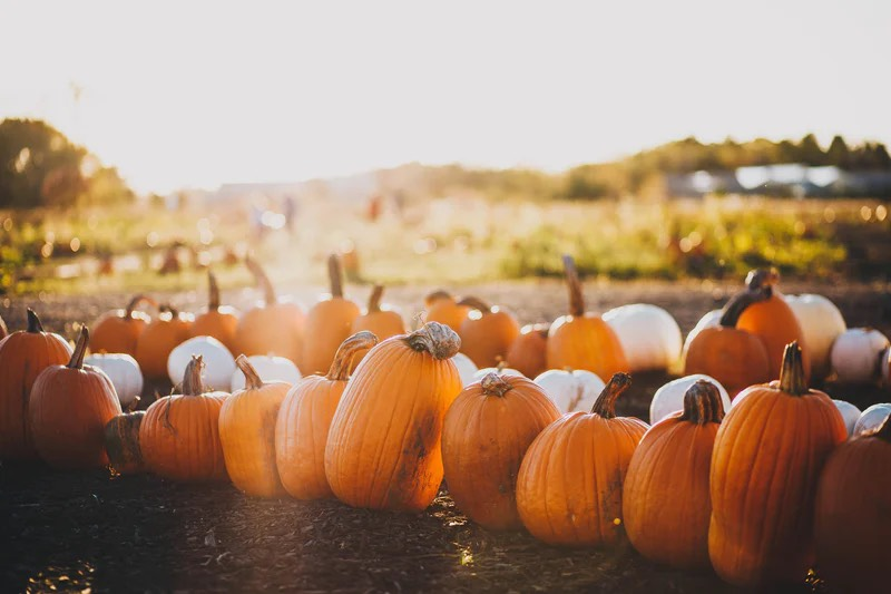 Lynnwood Lifestyles: 3 creative pumpkin carving ideas you won't want to miss https://t.co/SCtYeZiTvX https://t.co/UqSHNPhaT8