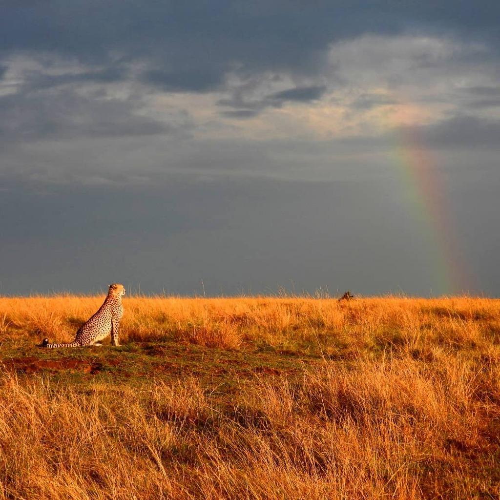 Watching the #rainbow #nowfilming #zebraplainsmoments #zebraplainscollection . . . . . #cheetahsofinstagram #cheetahlicious #cheetahlover #instacheetah #africanamazing #africanimals #africansafari #ig_africa #igscwildlife #wildlife_perfection #natgeoyour… https://t.co/0Zp1lHNTSB https://t.co/6HE8btnsf6