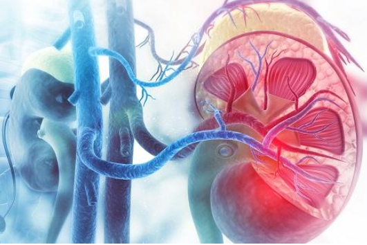 Treating Accessory Arteries May Be Important in Renal Denervation https://t.co/CrDdF4IMCi #Cardiology #cardiologist #Cardio #cardiovascular #Heart #openaccess #research https://t.co/ZIeFeaNBwp
