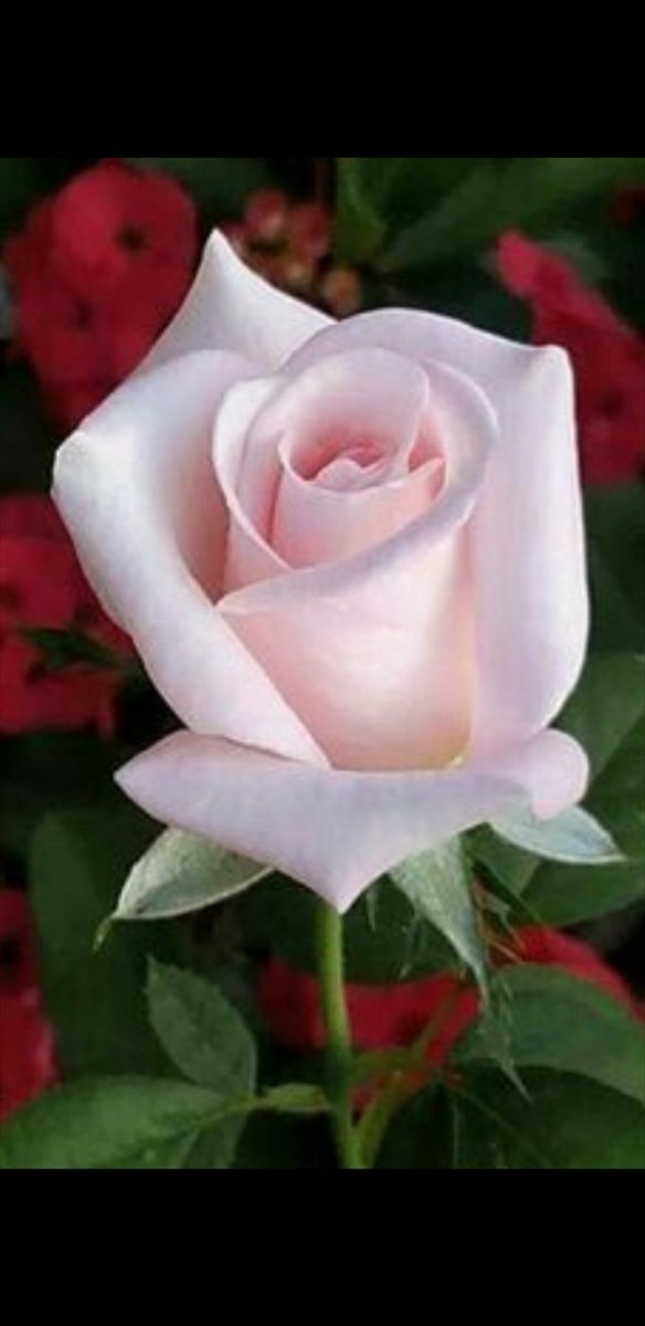 @Sweet_EssenceLY Hola mi apreciada amiga...! Q grato saber de ti....! Se q eres una persona integra y no tienes esa capacidad para lastimar y menos hacer daño...! Tu naturaleza va de la mano de eventos llenos de mucha PAZ y AMOR...! Como siempre es un placer saber de ti....! https://t.co/qgMwudGO2O
