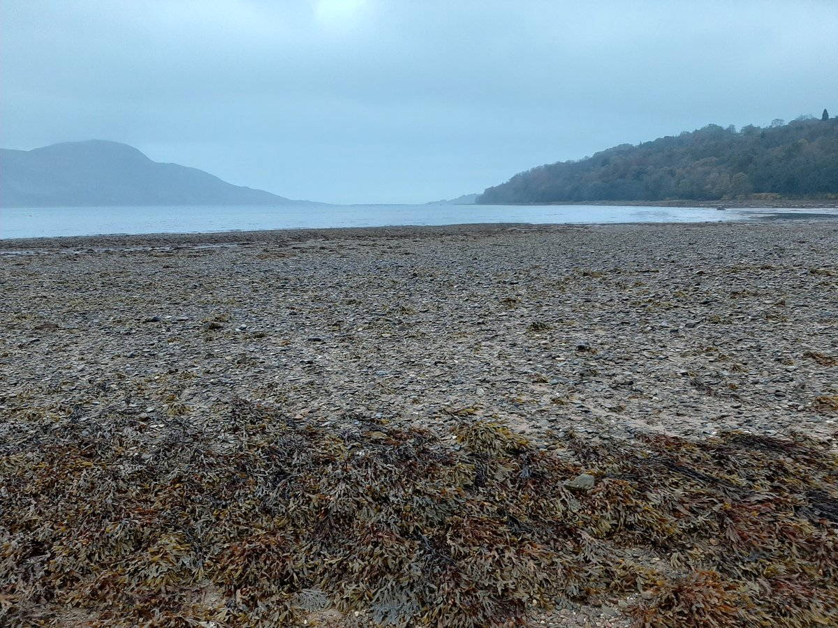 Another grey start to the day on Arran but we had a low tide so it was an opportunity to have a bit of a beach walk.