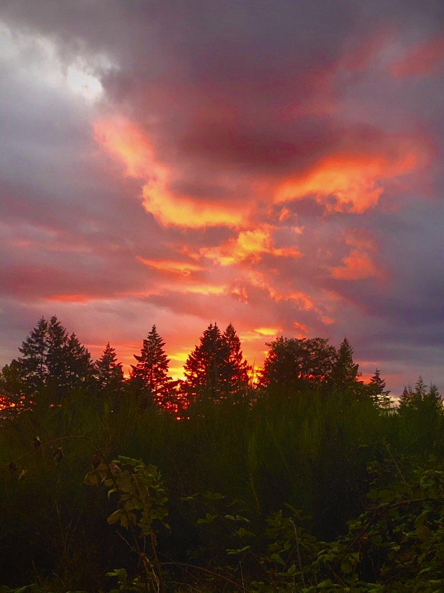 Sundown in #ForestPark #Portland #Oregon https://t.co/q2BWbXQq7S