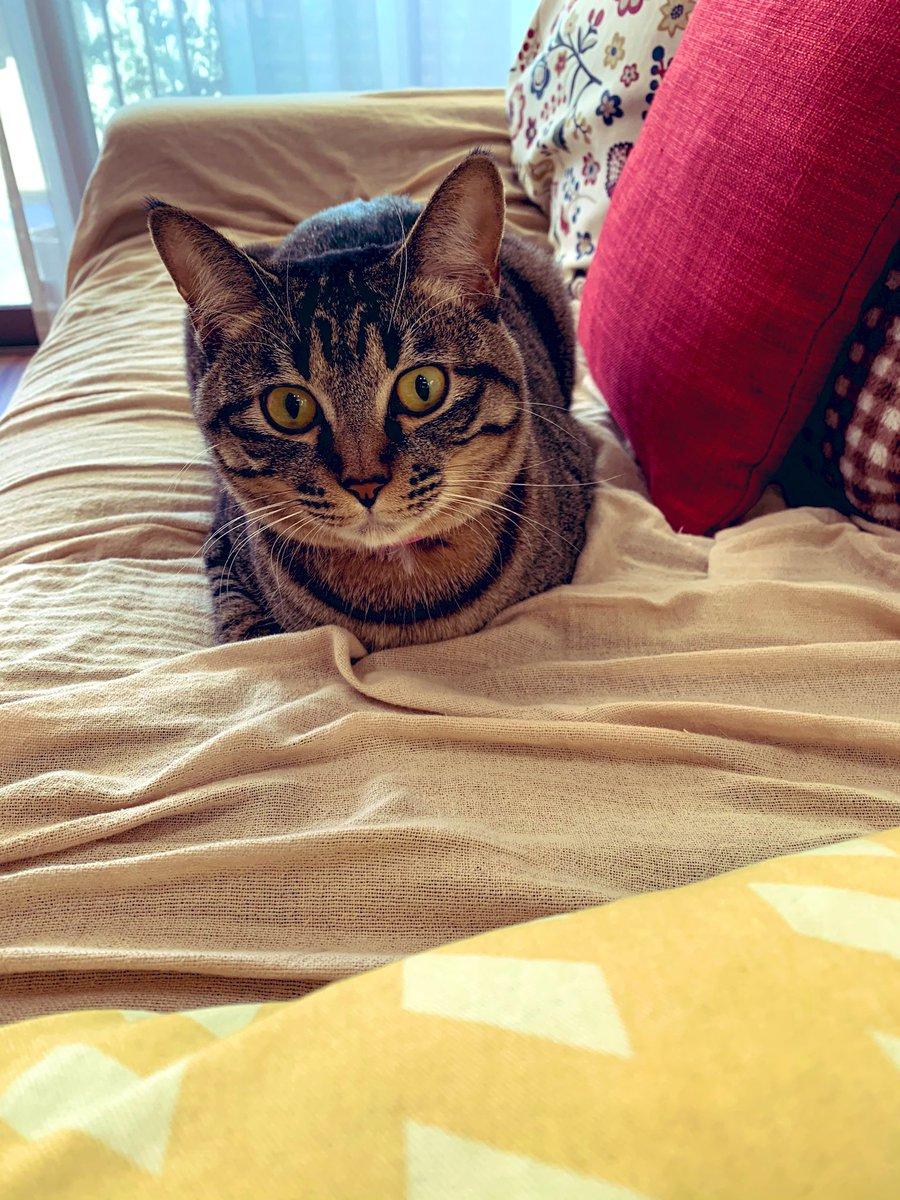 寒くなってきたことを、猫の丸まり方で確認😁#昼レンジャー21021os #猫好きさんと繋がりたい #猫のいる幸せ #転職#副業