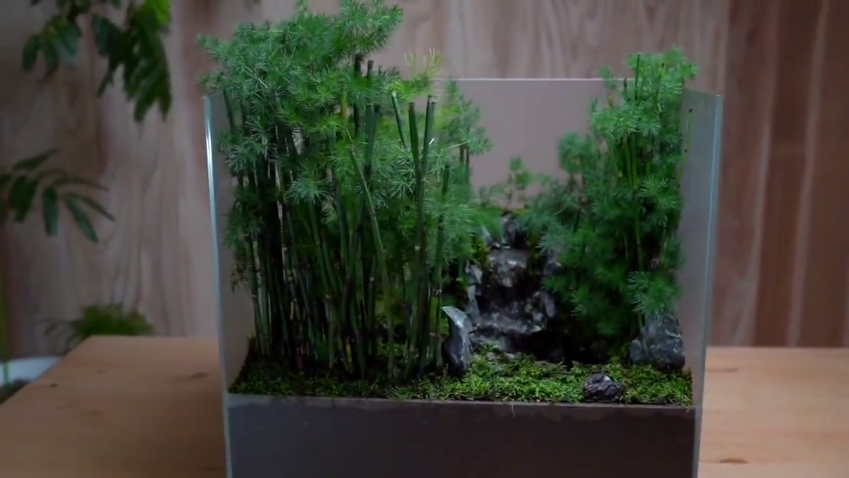Step into this gorgeous mini bamboo forest for some moments of zen → https://t.co/EGnGn0V6Xc https://t.co/fIdNNMYsmM