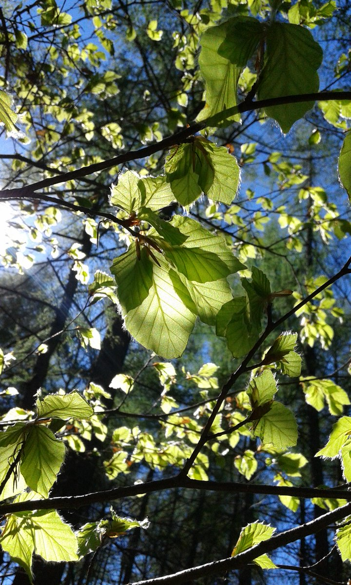 #Photo by #Mirakali Leaves & Light @choochad95 @BetweenTheSun @lebalzin @KeiraNightly2 @MarcDamian4 @yzcyzf @IamWill_WhoIam @ejlazar #photography #photographer #Mirapuri #NaturePhotography #leaves #light #atmosphere #inspiration #nature #earth #naturephoto https://t.co/77ATE5z20Q https://t.co/r7DWlDe69p