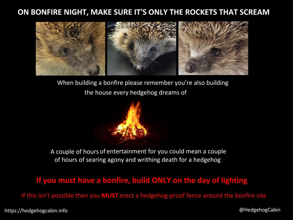 We have to stop killing our hedgehogs. Most people are kind and would do the right thing if made aware, so please help everyone see this. https://t.co/X6Ndi7Bwl7